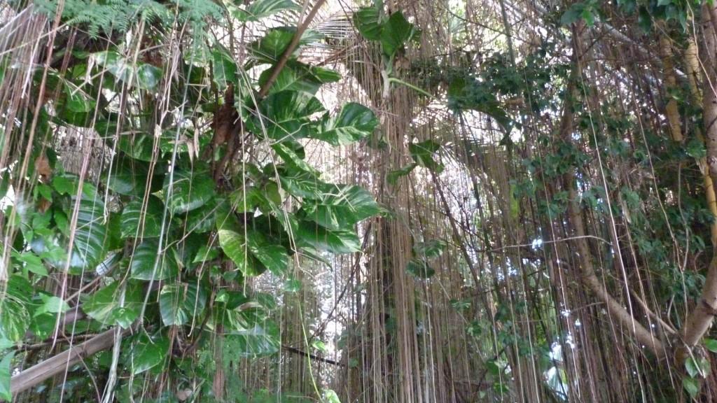 biosphere2 (2)