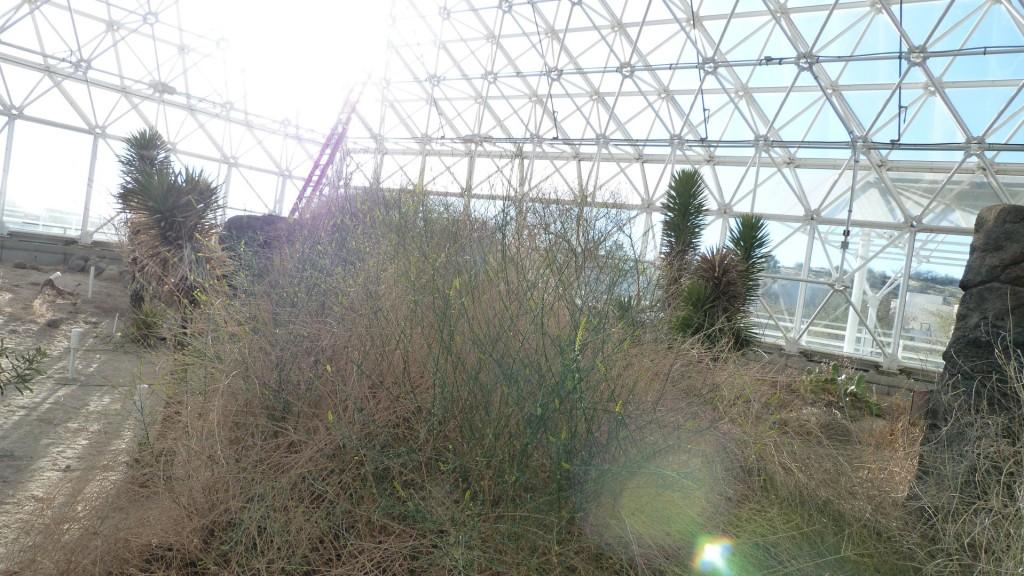 biosphere2 (6)